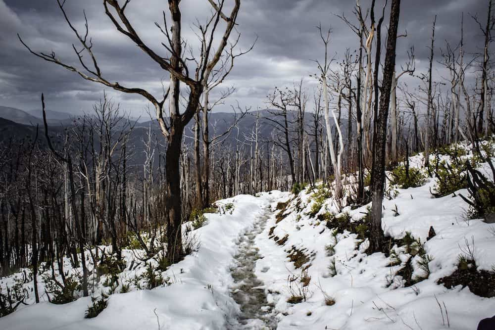 hiking trail in the Smoky Mountains with snow